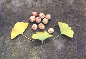 foglie frutti